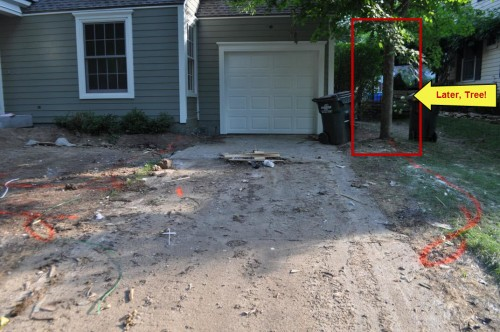 Driveway Sidewalk Planning - Later Tree
