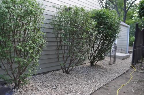 Landscaping - Start (2)
